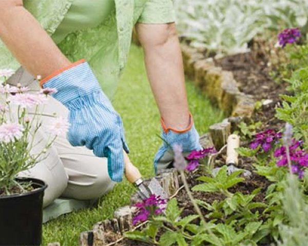 A influência da acidez do solo nas plantas